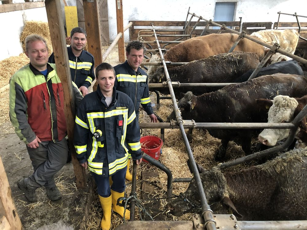 You are browsing images from the article: 08.11.2019: Feuerwehr rettet drei Jungrinder aus Güllekeller