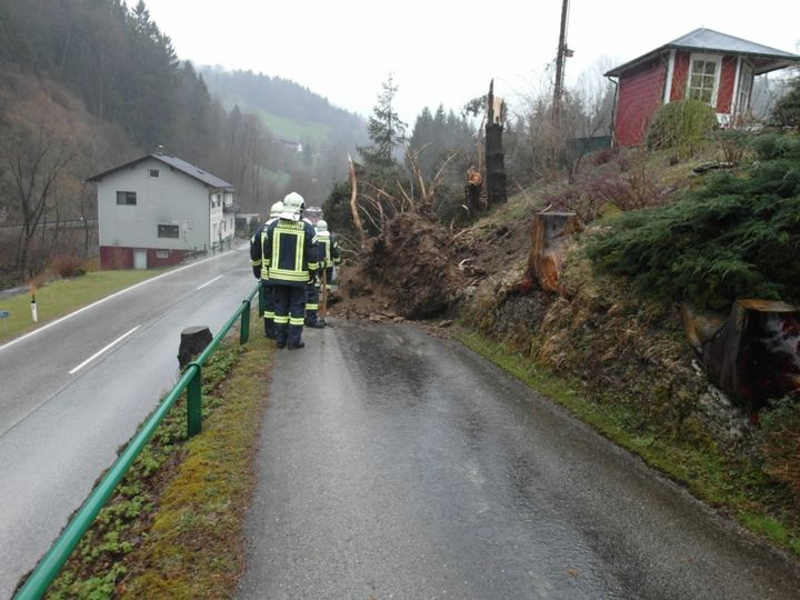 You are browsing images from the article: 31.03.2015: Sturmeinsatz - Baum über Straße