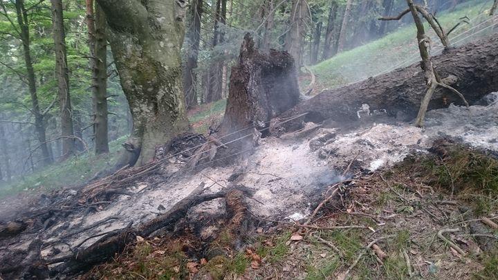 You are browsing images from the article: 28.06.2017: Waldbrand im alpinen Gelände in der Marktgemeinde Frankenfels