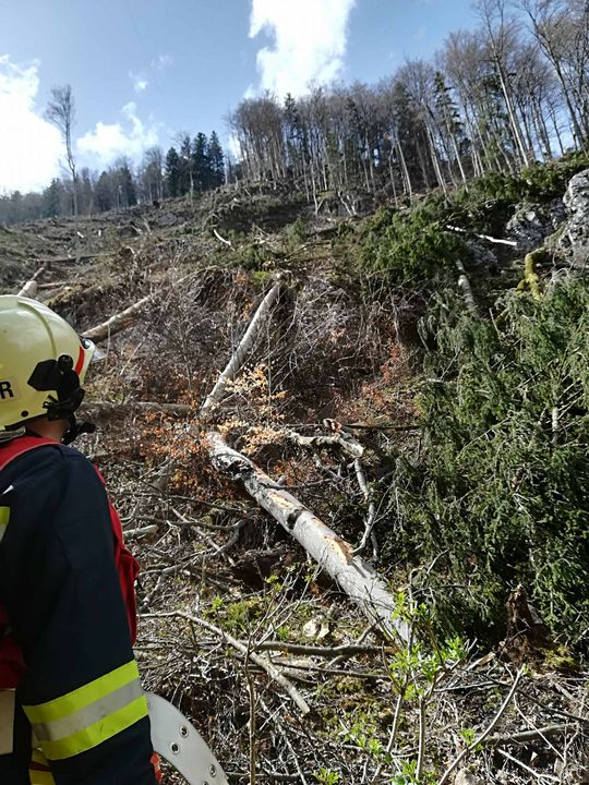 You are browsing images from the article: 12.04.2018: Tödlicher Forstunfall in Schwarzenbach/Pielach