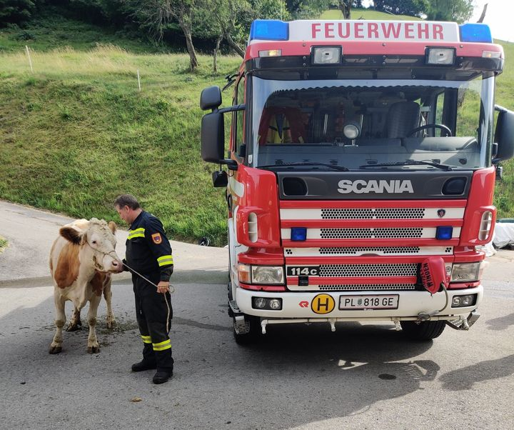 You are browsing images from the article: 22.07.2019: Tierrettung nach Einsturz im Heuboden